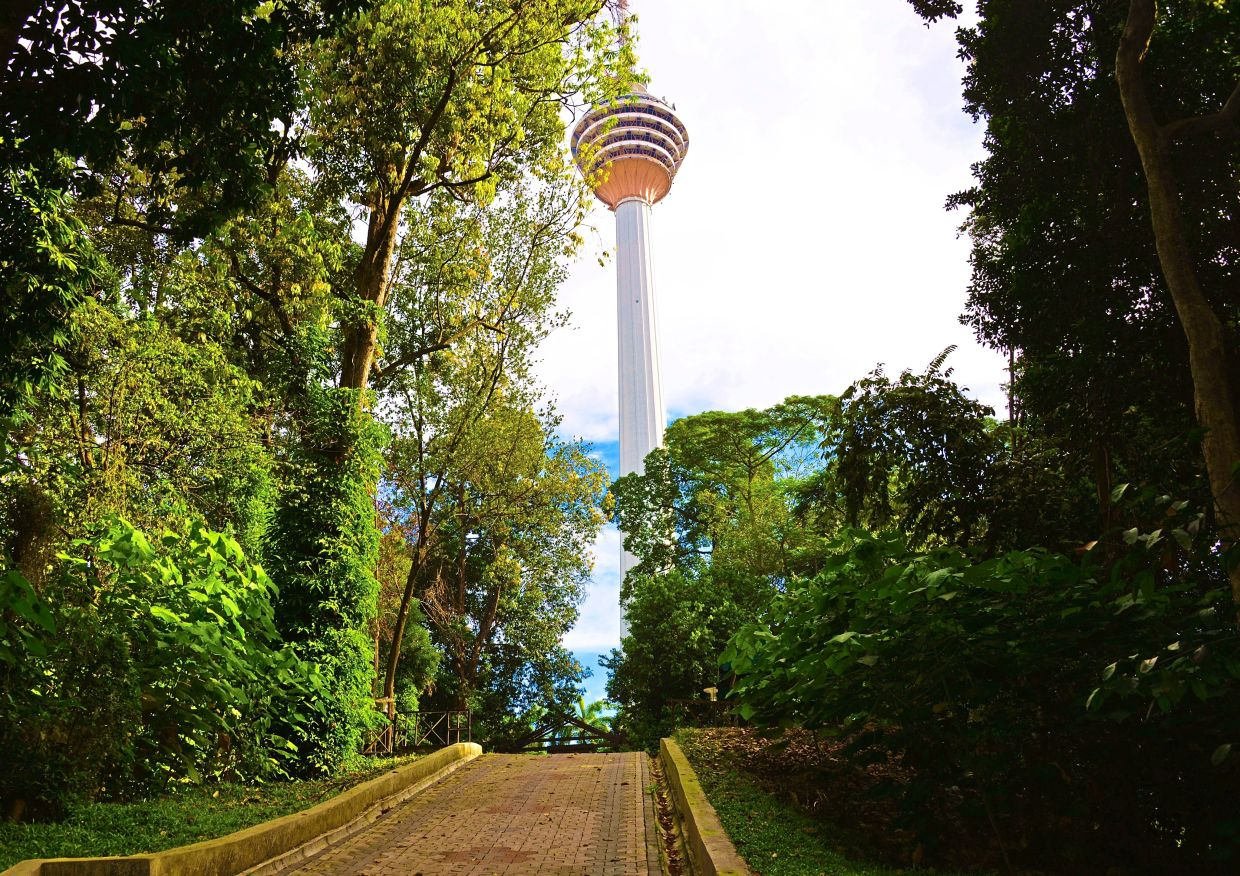 A view of a trail at the Kuala Lumpur Forest Eco Park with KL Tower in  the background. — Filepic