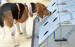 Trained dogs sniff out coronavirus-infected passengers at Helsinki airport