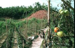 Pahang govt prepares to move against illegal farms in Cameron Highlands