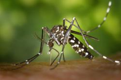 Negri sees 36% spike in dengue cases