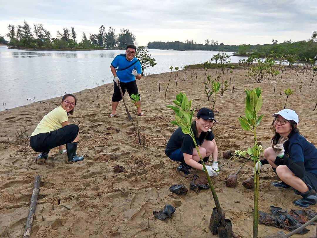A mangrove planting activity at Pantai Cherating organised by MNS and supported by an insurance company.
