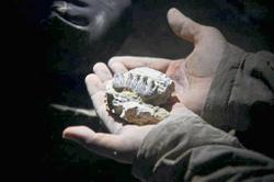 Love for Geology leads to fossil find