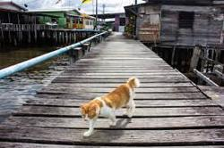 Irresponsible pet owners main reason for increase in Brunei's stray animals
