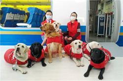 Guide dogs train to help their users on flights