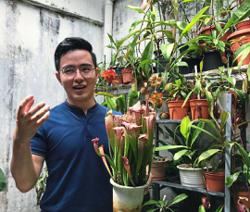 Passion for pitcher plants