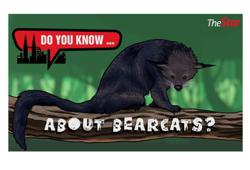 Do you know... about bearcats?