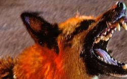 Sibu woman latest to die of rabies