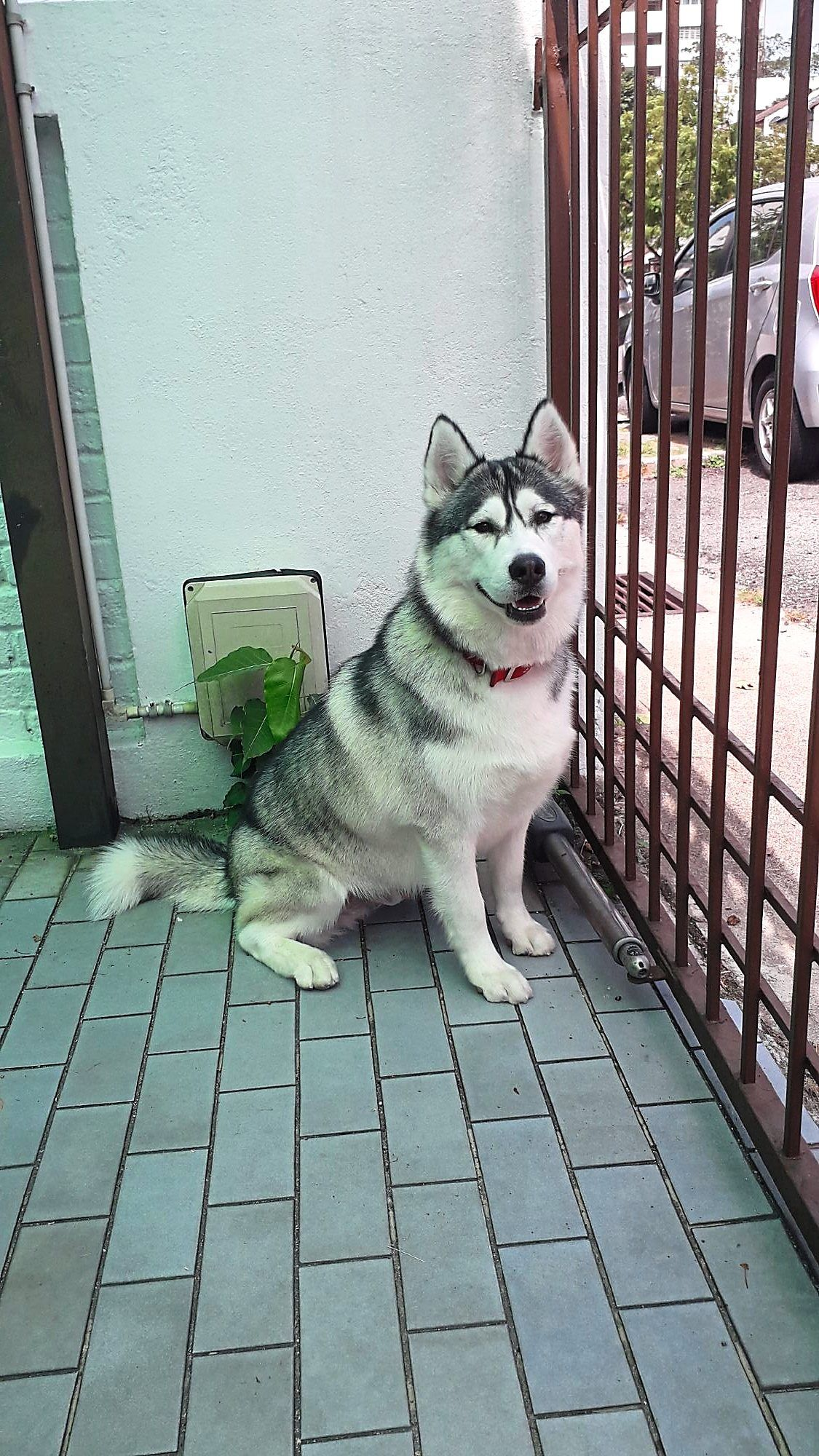 Kenzo is a social boy who loves to chat, and he has a howl like a siren. — Ellen Whyte
