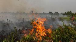 No smog in South-East Asia as Indonesia's Riau sees fewer wildfires this year