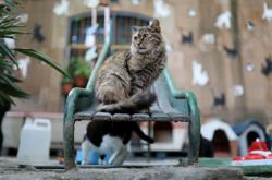 Catalan cat shelter gets smart to help COVID orphans