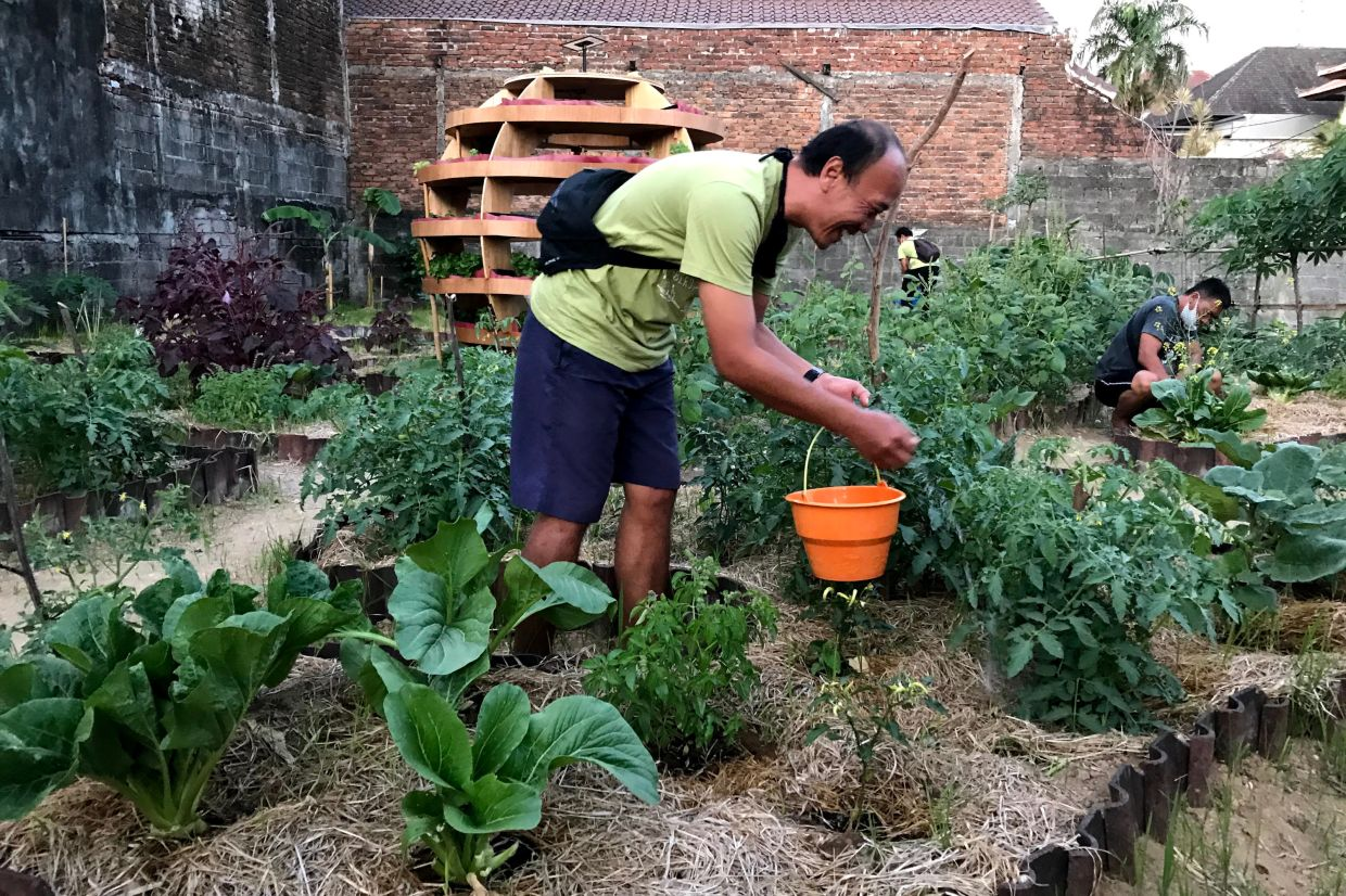 Locals are growing their own vegetables to help counter the loss of tourist income due to the pandemic. — ANTON MUJAHIR/dpa