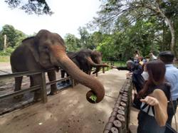 90% drop in visitors to Melaka Zoo since conditional MCO enforced in Klang Valley, says council president