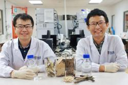 Singapore scientists turn prawn shells and tree branches into medicines and supplements
