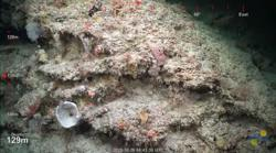 Australian scientists find huge new healthy coral reef off northern coast