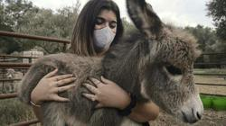Donkey therapy works wonders for traumatised and exhausted medics