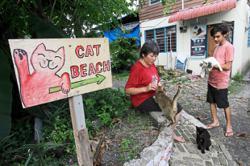 Sanctuary needs help for over 300 felines
