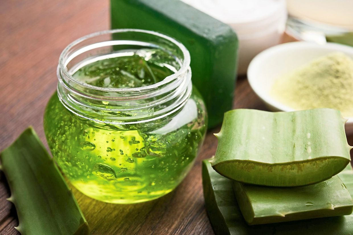 Aloe vera is highly prized for its moisturising properties. — AFP