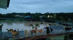Over 50 dogs drown after floods hit animal shelter in Negri
