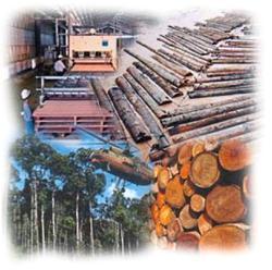 Jaya Tiasa to prioritise sale of pre-processed logs