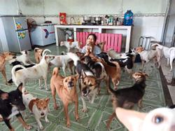 Woman dedicates her life to stray dogs
