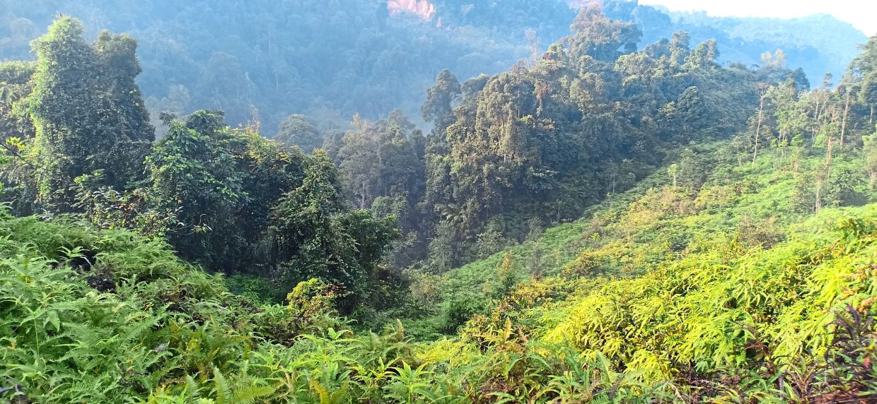 Bukit Enggang is popular among locals in Sungai Long, Cheras, as it offers a scenic view of the untouched nature in Hulu Langat.