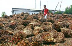 RM348m revenue from palm oil windfall profit levy this year