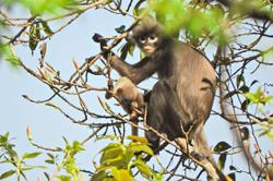 New primate species 'already endangered'
