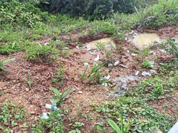 Scenic Sibu-Kapit road marred by rubbish