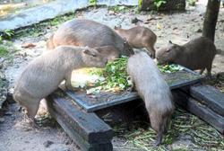 Zoo Negara revenue down
