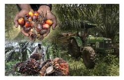 Crude palm oil for 3M futures up RM56 to RM3,420 per tonne