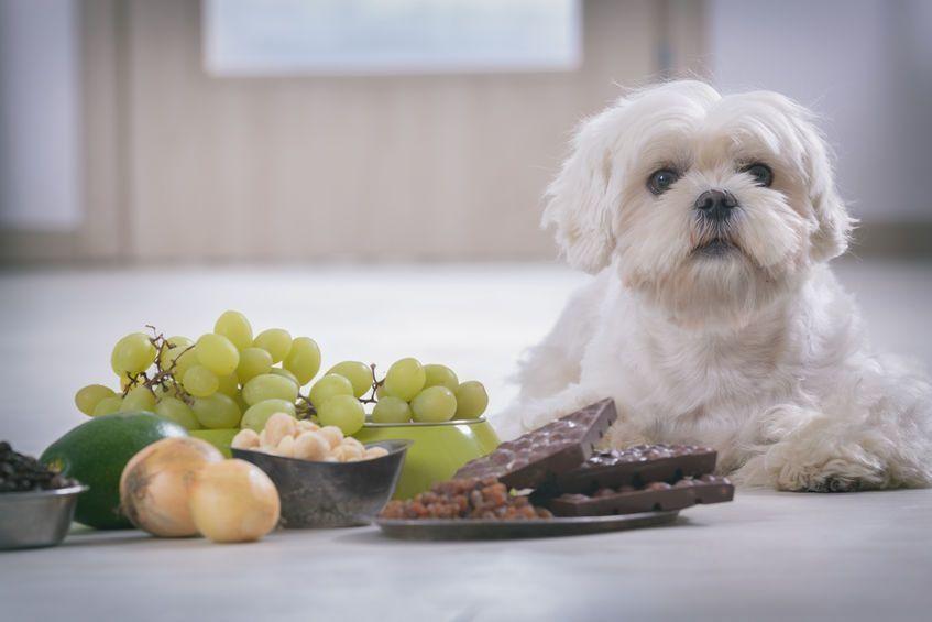 Ces aliments sont interdits aux chiens. - 123rf.com