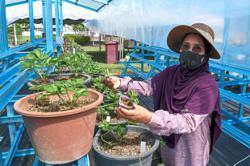Idle land turned into chilli farm using fertigation method