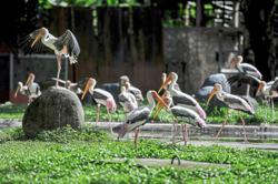 Help Zoo Negara by adopting animals