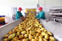 Vietnam experts propose solutions to boost agriculture industry