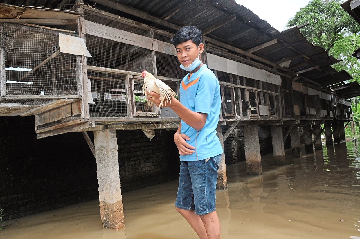 Muhammad Amar Naufal, 16, making sure that his grandmother's chickens are safe from the floods.