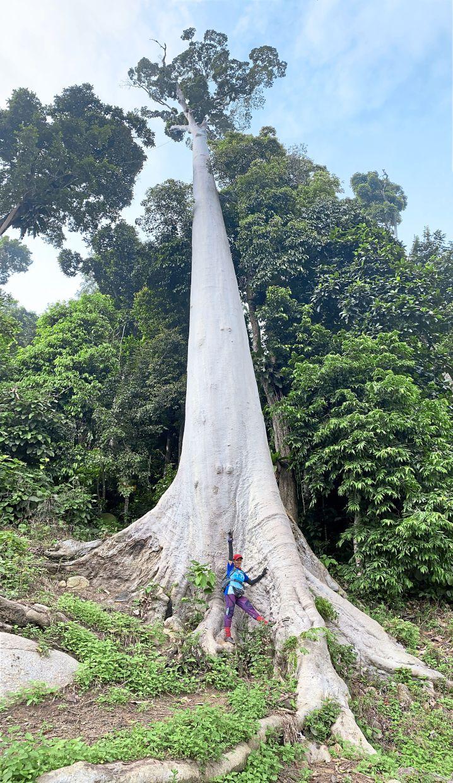 Monica Ann standing below the tall Tualang tree.
