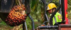 Sime Darby Plantation posts net profit of RM190mil in 3Q