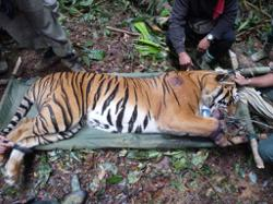 WWF-Malaysia: Budget 2021 is committed to environmental considerations