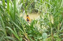 Search ongoing for boy who fell into river in Ipoh