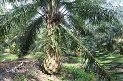 TH Plantations to complete sale of assets over next 12 months