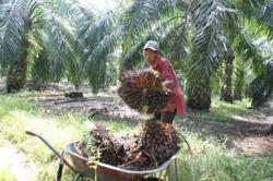 Palm oil's stunning rally is set to boost supermarket prices