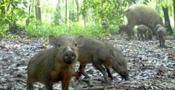 Don't allow sale of wild meat