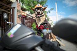 Biker dog thrills fans on the highways