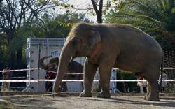 Kaavan the 'world's loneliest elephant' bound for happier new home in Cambodia