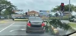 'Banana man' issued summonses for driving with tree lodged in car in Skudai