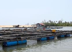 Apply for TOL, illegal caged fish breeders told