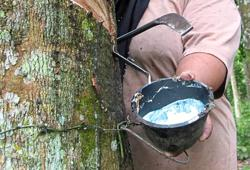 Natural rubber back in favour