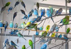 Tragic phenomenon of animal hoarding