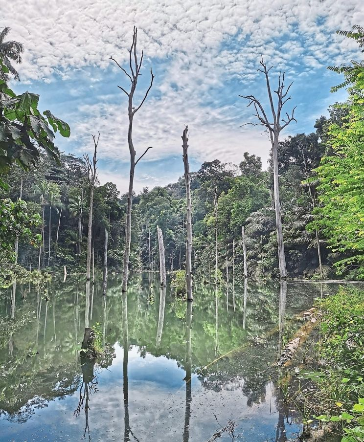 The lake in Shah Alam Community Forest, where the proposed road in the Shah Alam Local Draft Plan 2035 will be cutting through. — Photos courtesy of Zaharil Dzulkafly