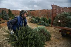 Locked down Greek fir tree farmers wait for Christmas miracle